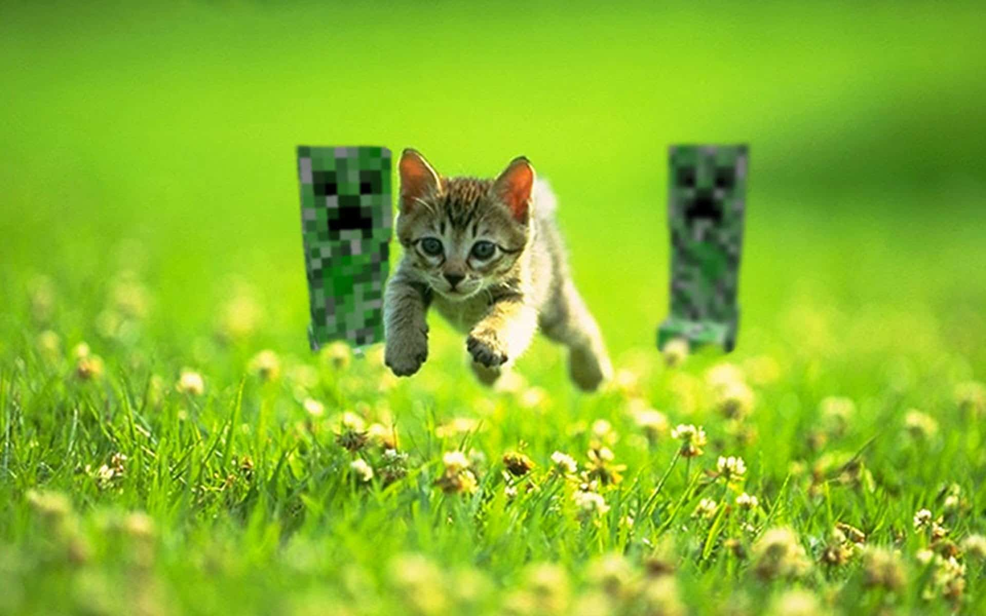 Minecraft creeper chasing cat background