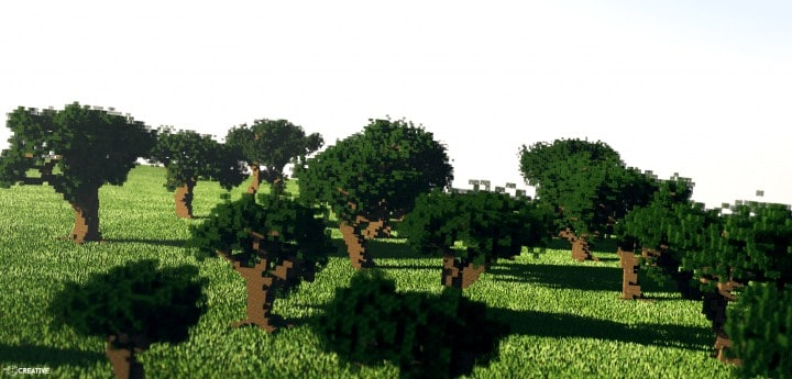Photo of Oak Tree Pack